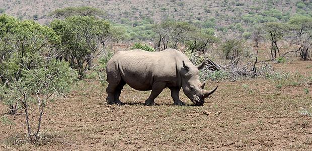 Hluhluwe Umfolozi National Park