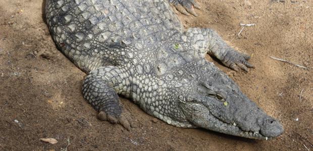 Krokodýlí centrum – odjezd ze St. Lucie